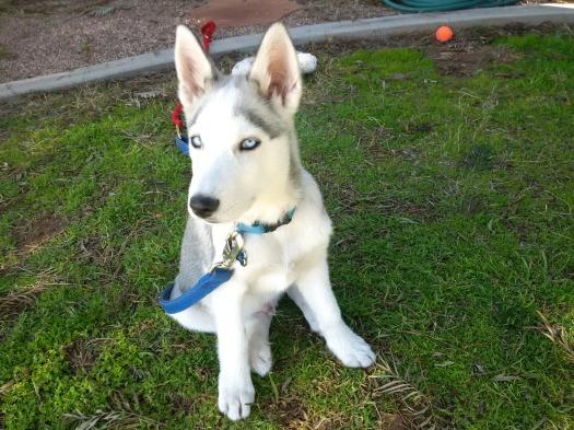 Sakari at five months